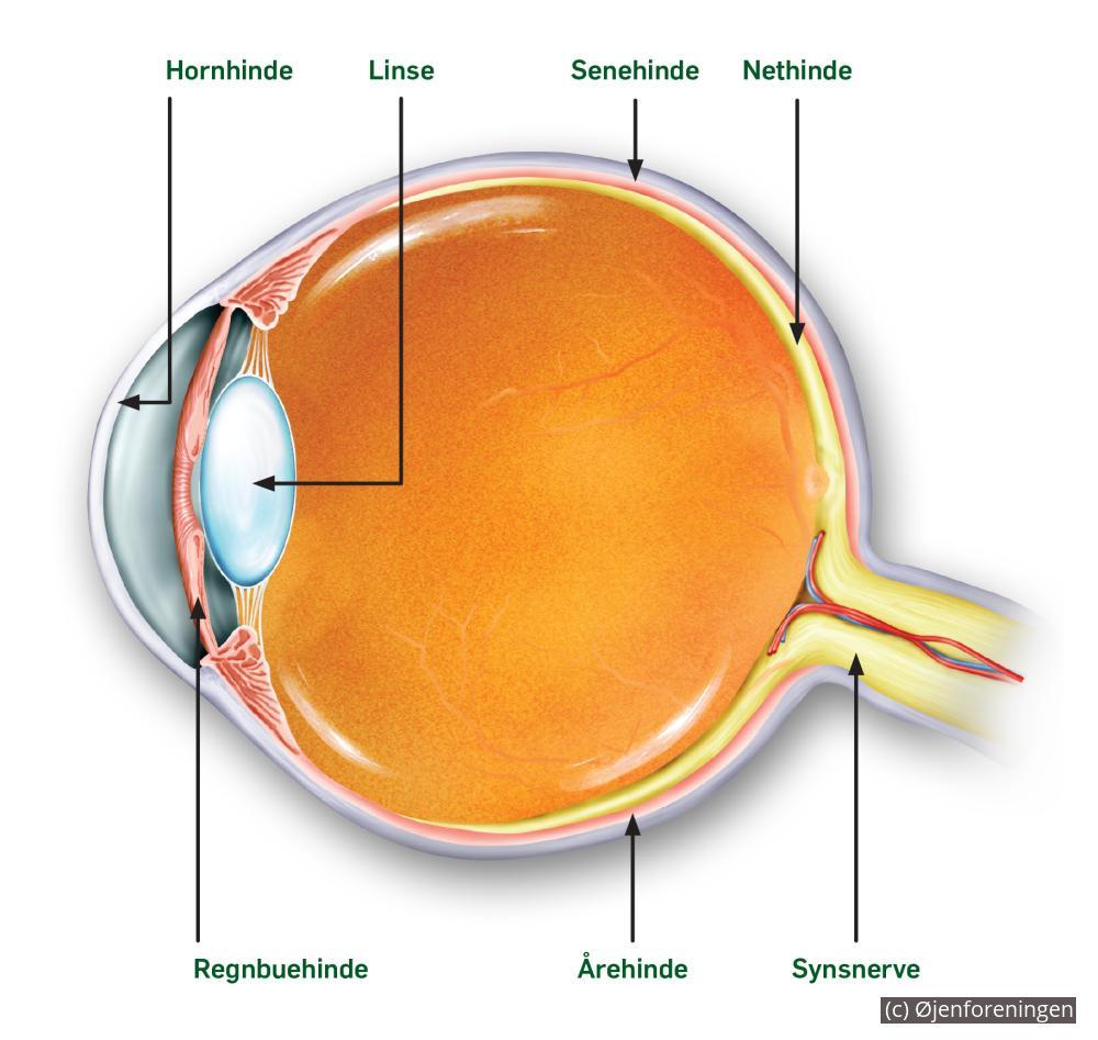 a82798c4c6b3 Blodprop i øjet